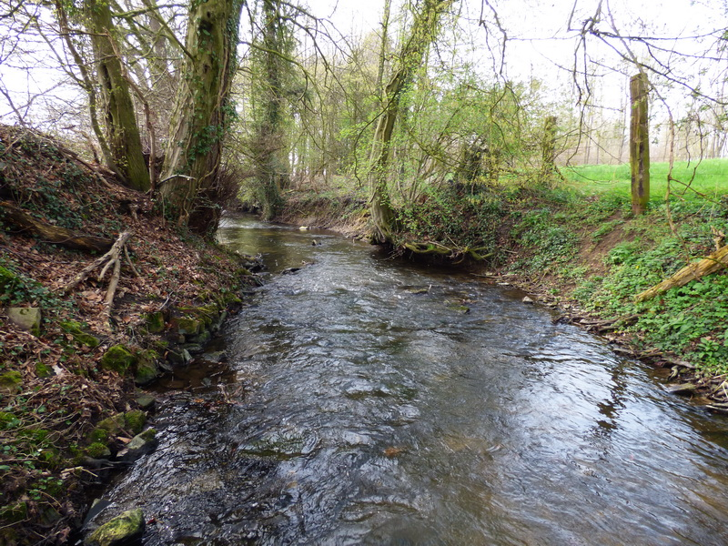 Small stream Dutch / German border / Chub / Dace / Roach / Barbel / Brown trout / Asp